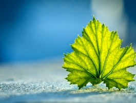 A Conversation with a Leaf: Seeing God Through His Signs
