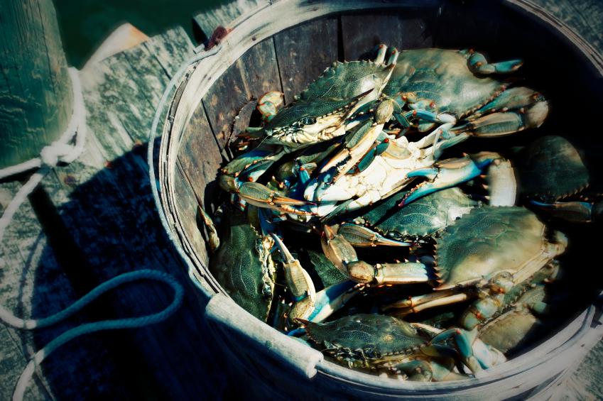 Crabs In the Muslim Bucket